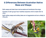 5 differences between bees and wasps revised Jan 2017