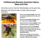 6 differences between bees and flies revised Jan 2017
