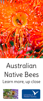 Australian Native Bees, Learn more, up close. Revised Jan 17