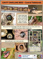 Native bees_cavity_dwellers_poster.pdf