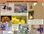 Native_bees_ground_dwellers_poster.pdf