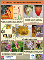Native_bees_pollination_poster.pdf